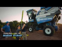 Modern Mechanized Grape Harvesting - Amazing Totals